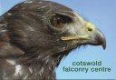 Cotswold Falconry Centre 2006 - Harlan's Hawk.